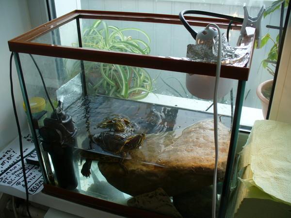 Обогреватель для черепахи своими руками