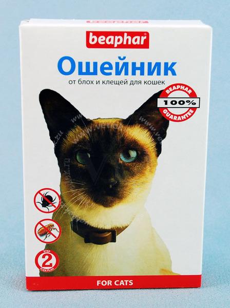 Как кошку избавить от блох в домашних условиях