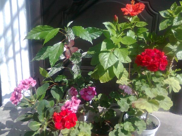 Цветы боящиеся прямых солнечных лучей