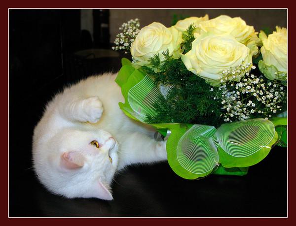 Открытки цветы для тебя с животными 449