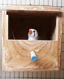 Как сделать гнездо амадинам