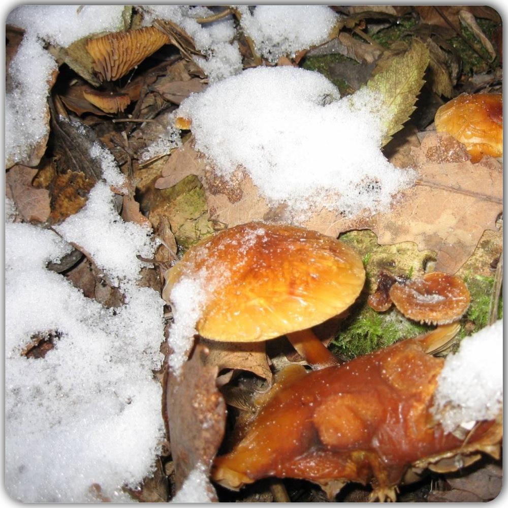 Фотообои грибов опят