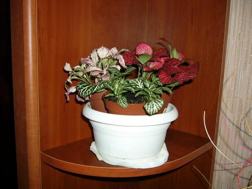 Можно ли в один горшок сажать разные цветы 23