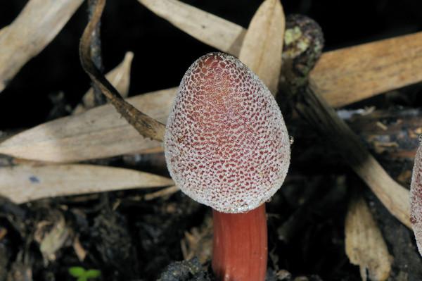 Цветы похожие на грибы