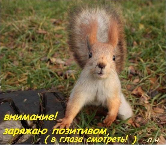 http://otvet.imgsmail.ru/download/5c98b729fb02600e276ccda110c64390_i-6793.jpg