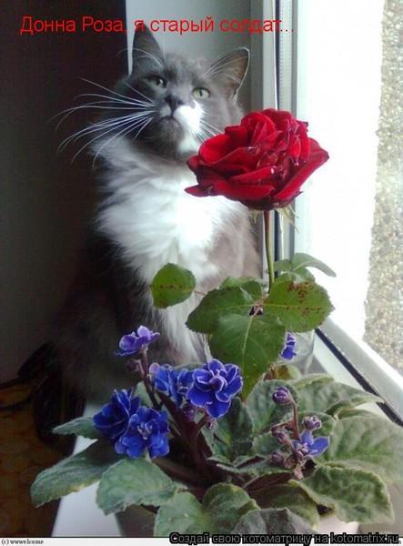 Донна роза поздравления