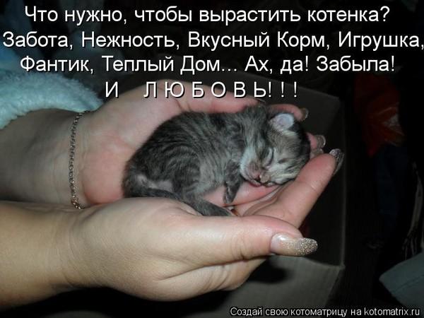 Маленький котенок что надо делать