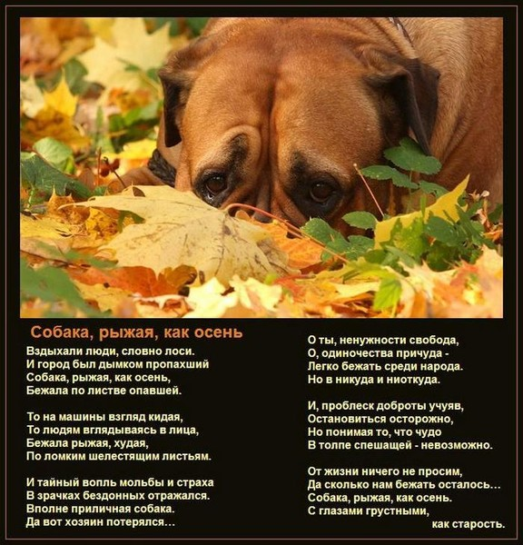 Почему так предан пес стихотворение