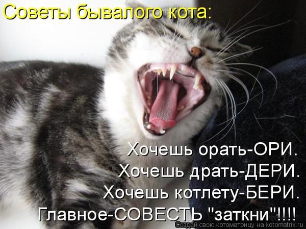 Почему кот орёт постоянно кастрированный