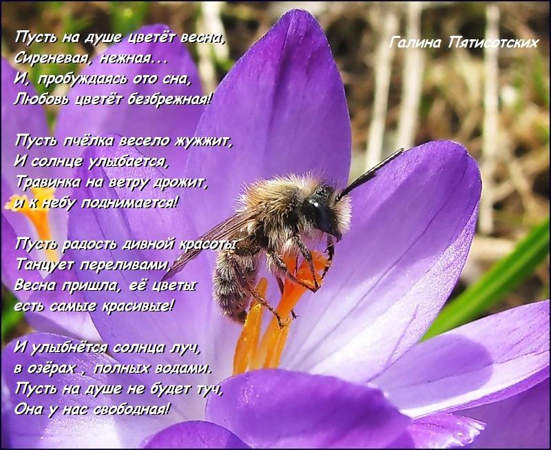 Стих в душе цвели