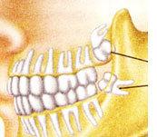 Сколько всего зубов вместе с мудрыми