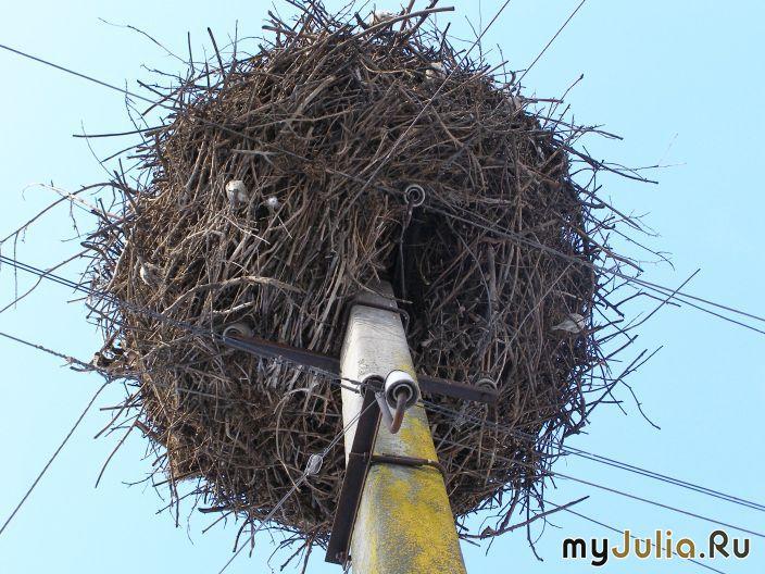 Как свить гнездо для аиста из веток