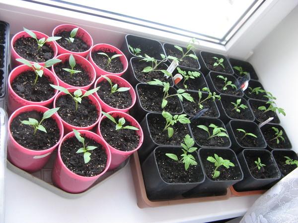 Торфогрунт универсальный для томатов и перцев цветная упаковка 5 л 403 велторф
