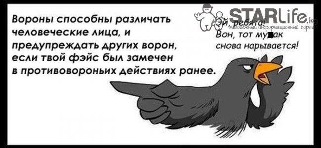 Анекдот Про Льва И Косяк Ворону Видео