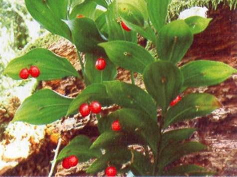 растения в красной книге россии названия и фото