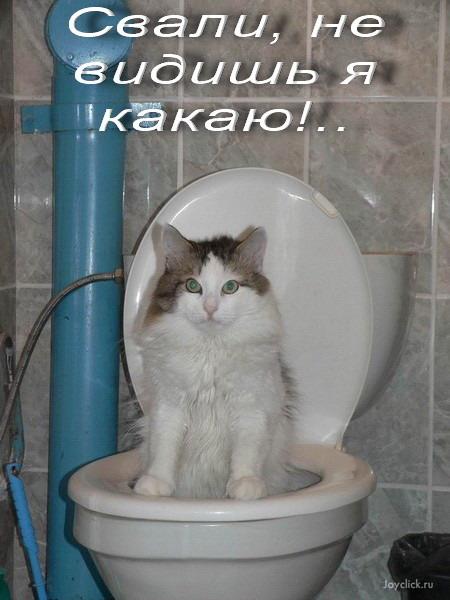 Необычные способности кошек зеркало невероятного