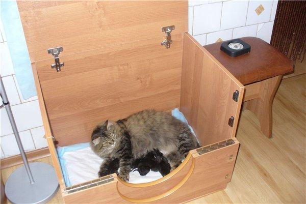 Коробка для котенка своими руками