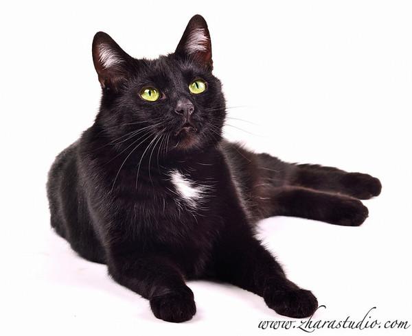 картинки черный котик лежит поджав уши