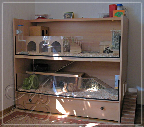 Дом для морской свинки фото