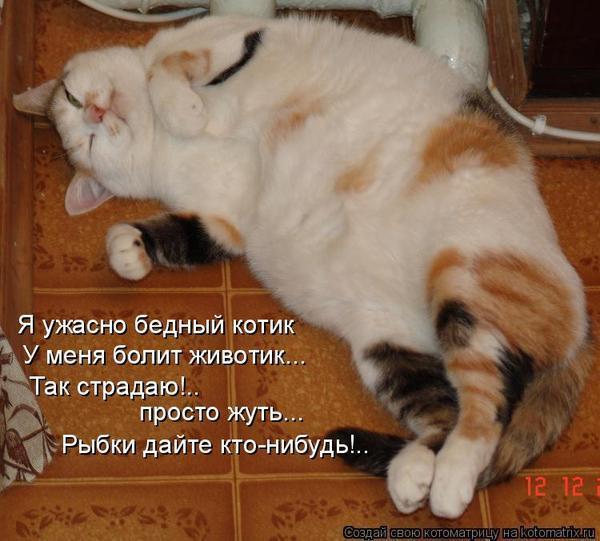 Болит живот у кота что делать в домашних условиях