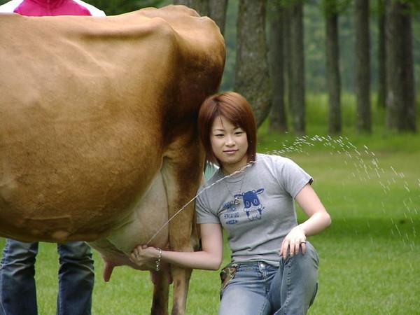 Ответы@Mail.Ru: а вы корову доите с боку,или с зади?