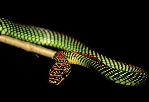 смотреть змей фото