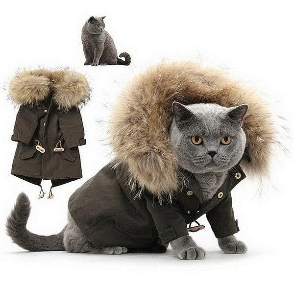 Что одеть в год кота
