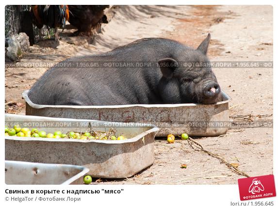 Корыта для свиней