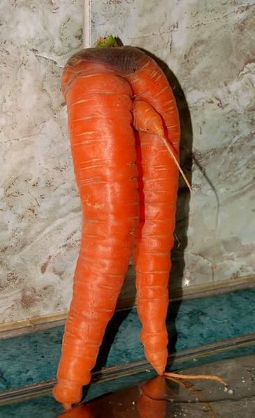 в попе морковка фото № 48453 загрузить