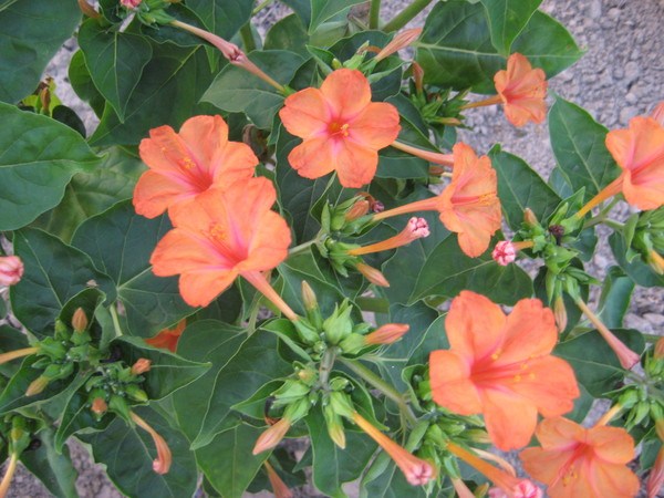 Цветы которые цветут вечером