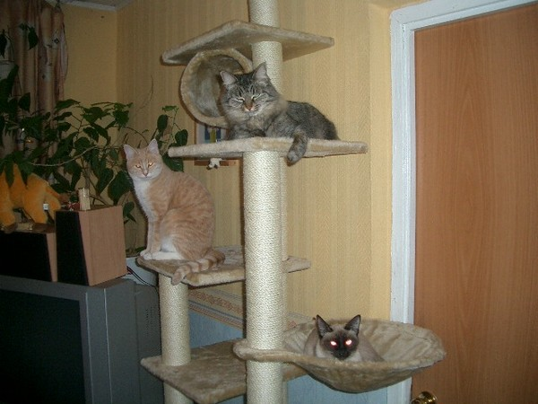 Когти для кошек своими руками