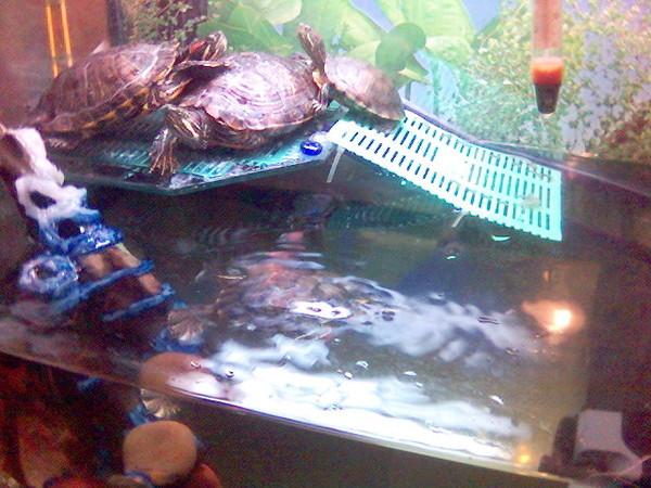 Островок для черепахи своими руками как сделать