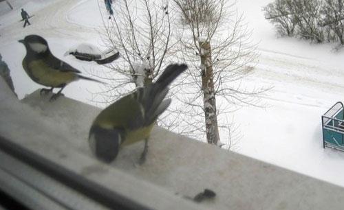 Примета голубь сел на открытую форточку