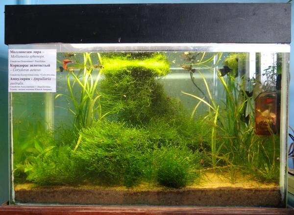 Выращивание мхов аквариумных 13