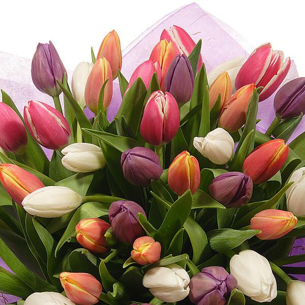Тюльпаны красивая открытка 25