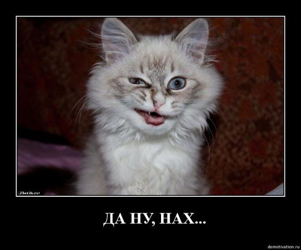 bolshie-siski-aziatki-zrelie-mamochki-volosatie-bryunetki