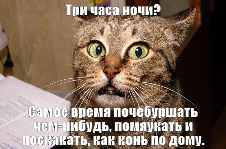 Почему кошка себя странно ведет себя