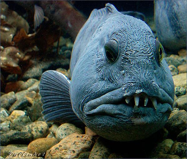 Фото самых страшных рыб в мире