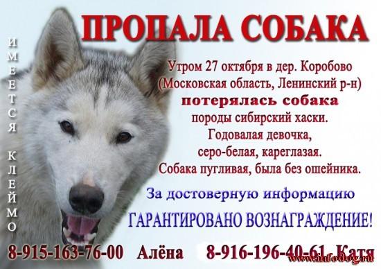 Обьявление продажи собаки фото работа в г чайковском свежие вакансии