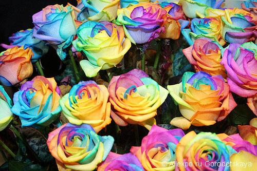Цветное поздравления