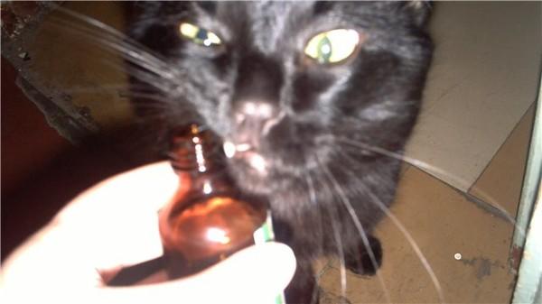 Валерьянка что делает с кошками