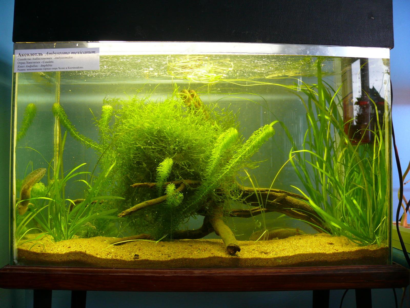 Выращивание мхов аквариумных 44