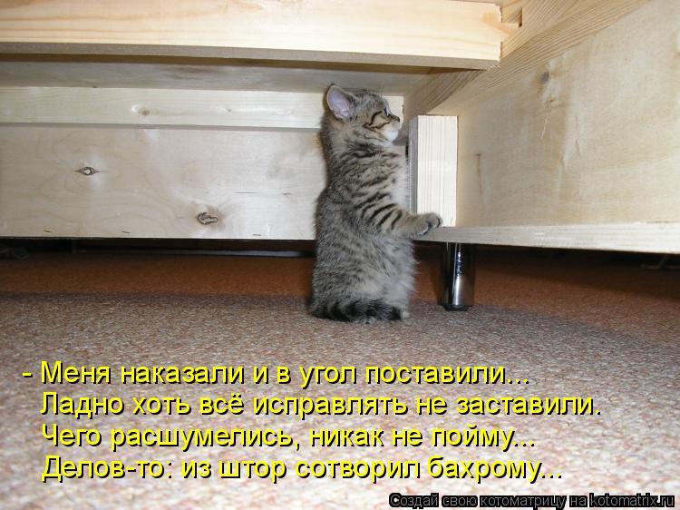 Как на поставить кота