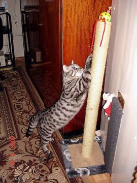 Как сделать ремонт если есть кошки
