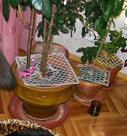 Как сделать чтобы кот не копал цветы