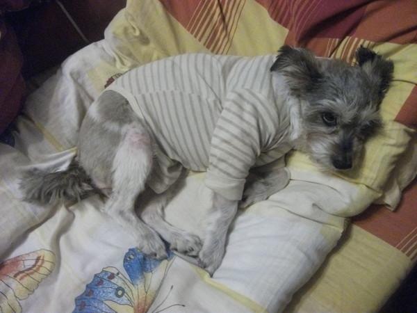 Раны у собаки как лечить в домашних условиях - Плитка, керамогранит, мозаика - ПЛИТКА. ЕСТЬ! - Вологда