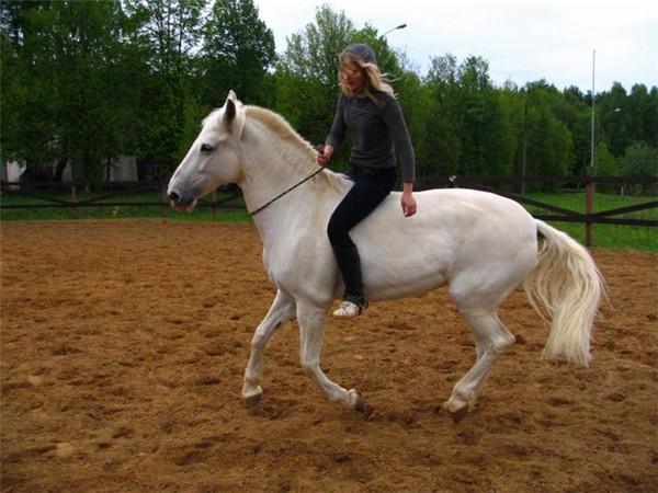 Кордео для лошади