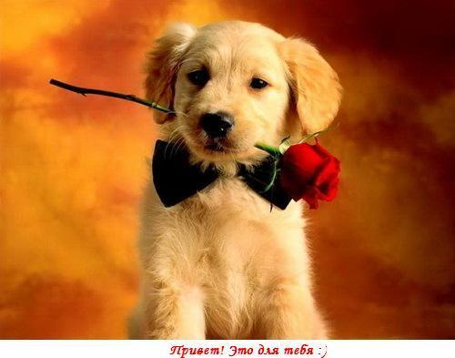 Открытки цветы для тебя с животными 926
