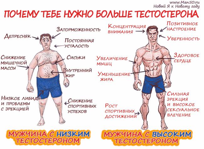 Как сделать анализ тестостерона - Pressmsk.ru