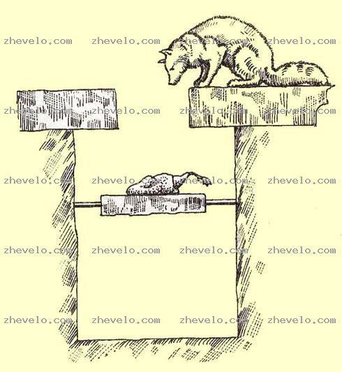 Живоловушка для лисы своими руками чертежи 5